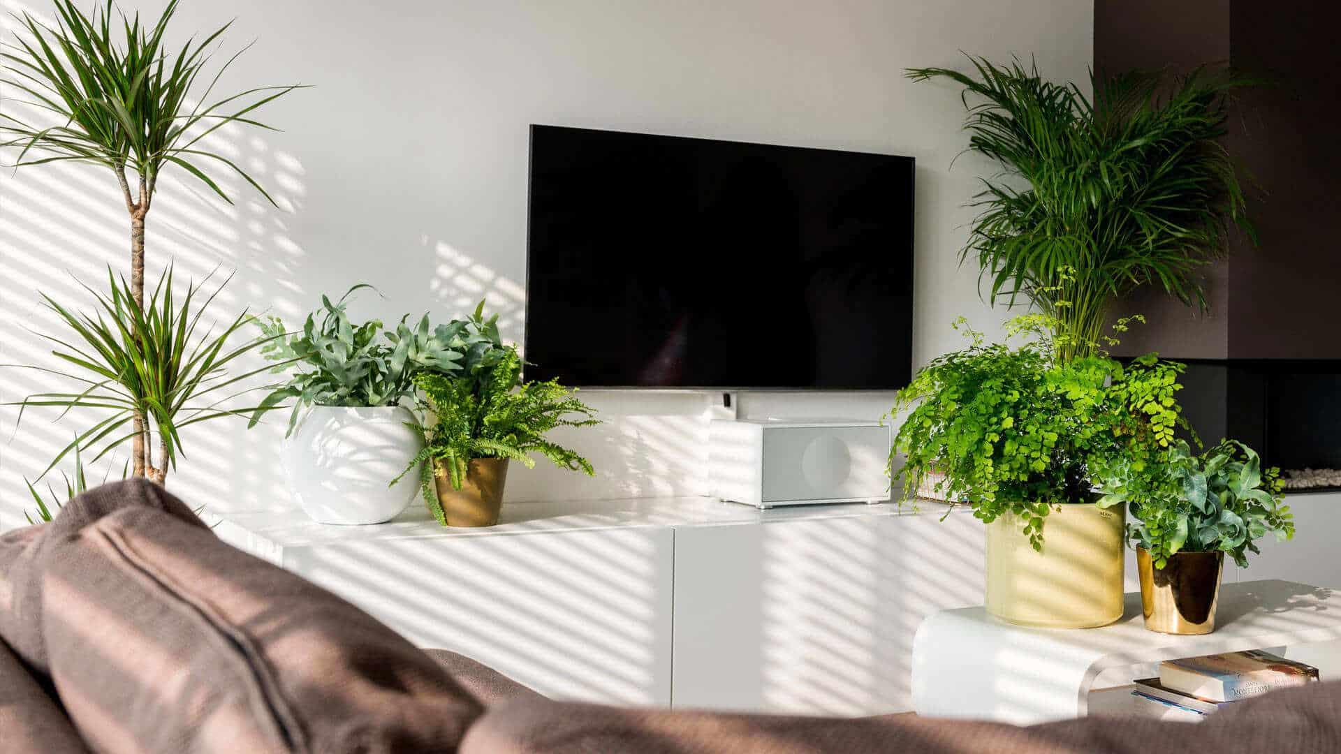 les-plantes-et-votre-appartement-un-duo-gagnant